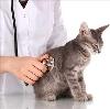 Ветеринарные клиники в Навашино